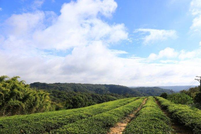 漫遊大北坑走讀客庄風情 擂茶玩體驗品東方美人茶香 @YA !野旅行-吃喝玩樂全都錄
