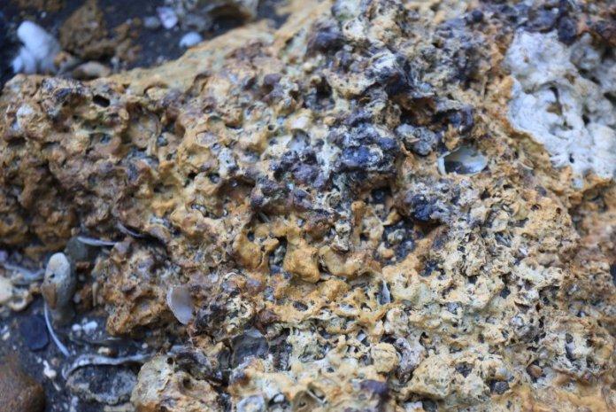 累積7500年的珍貴資產 珍愛桃園藻礁 @YA !野旅行-吃喝玩樂全都錄