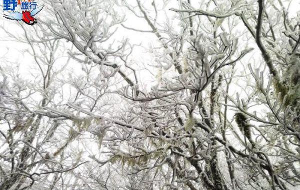 急凍!太平山一夜雪白 夢幻霧淞森林美翻了 @YA !野旅行-玩樂全世界