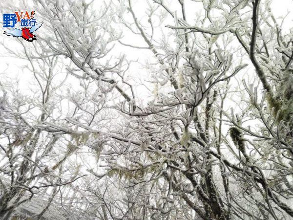 急凍!太平山一夜雪白 夢幻霧淞森林美翻了 @YA !野旅行-吃喝玩樂全都錄
