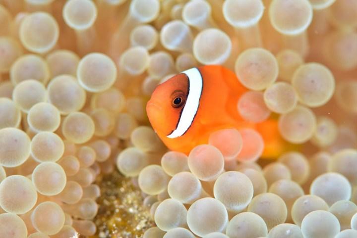 海底忙什麼-東管處東海岸及綠島海域潛點探勘 @YA 野旅行-陪伴您遨遊四海