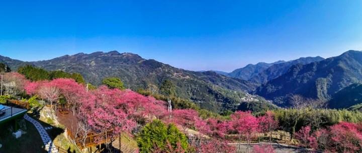 秒到日本的感動 新竹悅峰山莊櫻花盛開 @YA !野旅行-吃喝玩樂全都錄