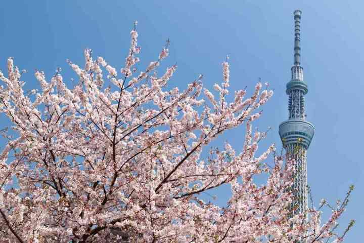 搭乘東武鐵道遊東京近郊 必遊六大賞櫻景點曝光 @YA !野旅行-吃喝玩樂全都錄