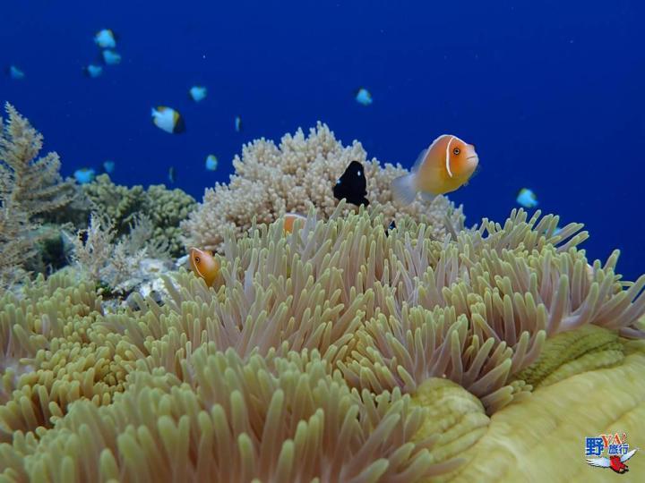 台帛旅遊泡泡4/1首航 期初每週四、日各一班往返 @YA 野旅行-陪伴您遨遊四海