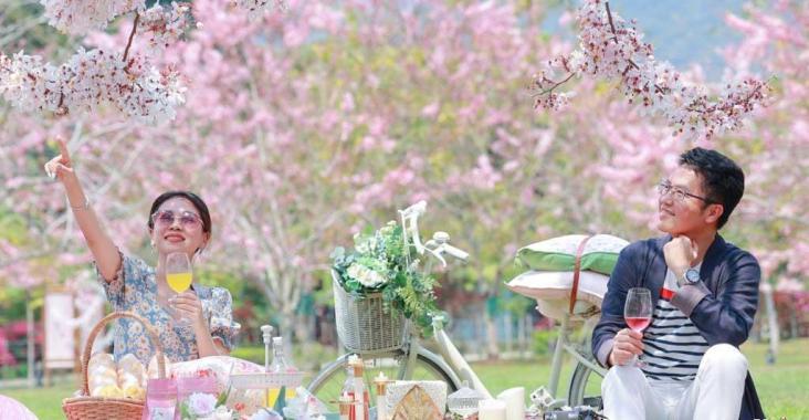 台東鹿鳴酒店平地櫻花季登場 粉紅花旗木盛開超浪漫 @YA 野旅行-陪伴您遨遊四海