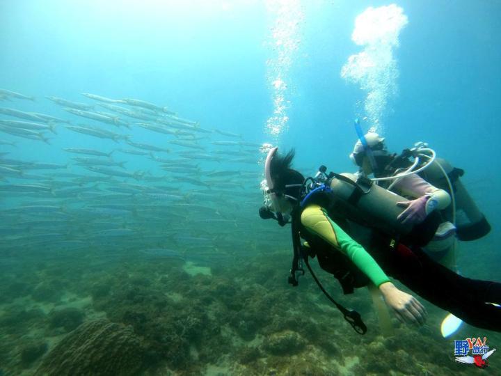 小琉球水啦PADI潛水訓練 體驗「與龜共游」的療癒感 @YA !野旅行-吃喝玩樂全都錄