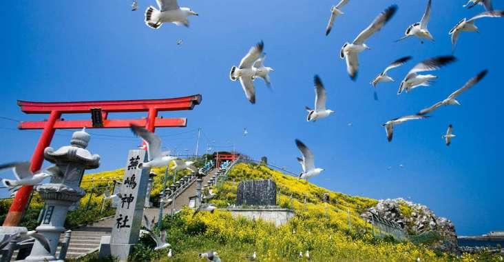 「鷗」耶!八戶幸運之旅 到東北八戶地區走一遭 包你幸運一整年 @YA !野旅行-玩樂全世界