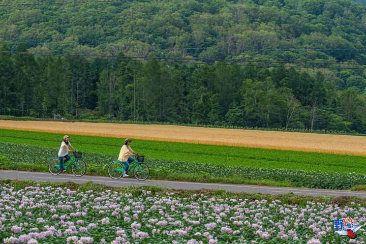男爵馬鈴薯的故鄉-北海道新雪谷的夏日風情 @YA !野旅行-吃喝玩樂全都錄