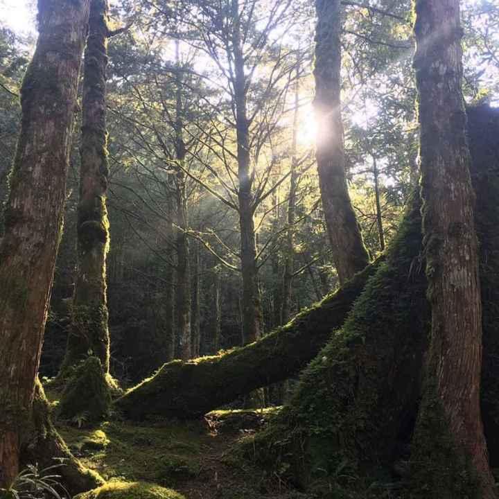 力麗馬告園區之棲蘭、明池森林遊樂區於110年7月13日重新開放 @YA !野旅行-吃喝玩樂全都錄