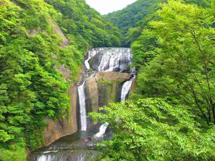 日本人超愛的打卡能量秘境,貓頭鷹神社求財滾滾來 @YA !野旅行-吃喝玩樂全都錄