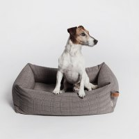 Cloud 7: Strictly For Modern Dogs | Yatzer