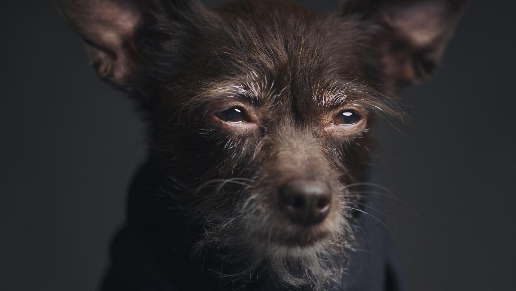 Expressive Animal Portraits by Vincent Lagrange  Yatzer
