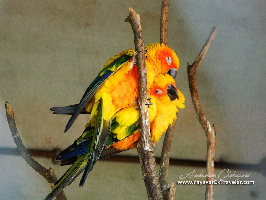 Luv bird