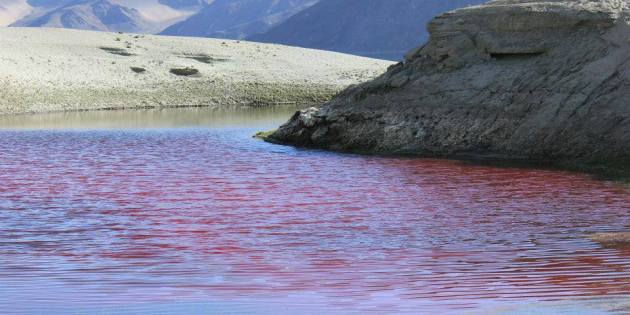 Red water patch of Tso Pangong