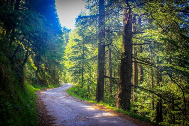 The road passes through forest