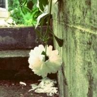 Yüreksiz Bir Bahar…