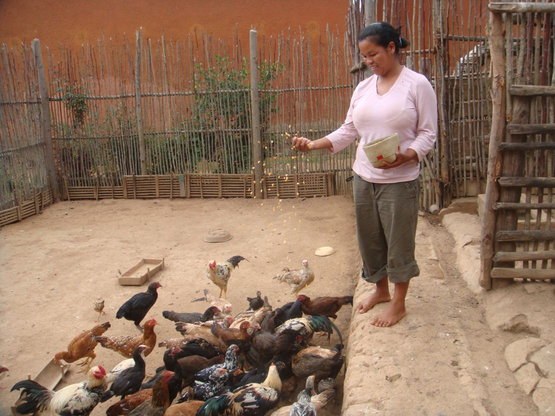 Young woman feeds poultry