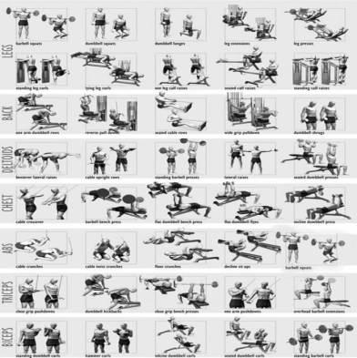 strength training anatomy workout 2 pdf