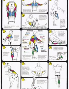 Weight training flexibility workout chart healthy fitness arms also rh yeahweworkout