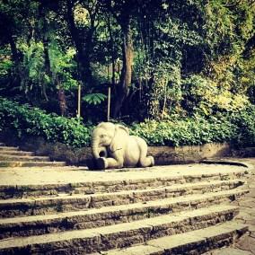i_elephant