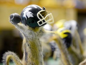 "The quarterback is poised to pass the winning touchdown as 21 other stuffed chipmunks ""play"" an MSU vs. UM football game, July 2015, in a taxidermy shop in Lansing. Dave Wasinger/ Lansing State Journal"
