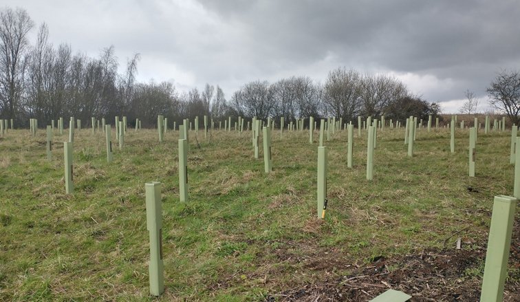 Councillors approve new tree planting framework for Basildon