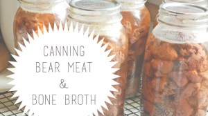 Canning Bear Meat (+ Bone Broth 101)