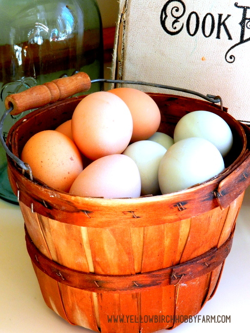 Yellow Birch Hobby Farm- Preventing Rotten Eggs 2