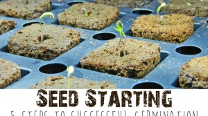 Seed Starting: 5 Steps to Successful Germination