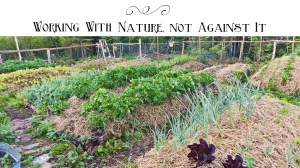 Permaculture Gardening: Working With Nature, Not Against It