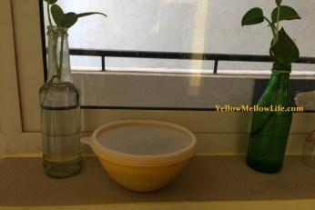 pitaya seed planting
