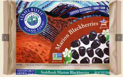 Marion Blackberries