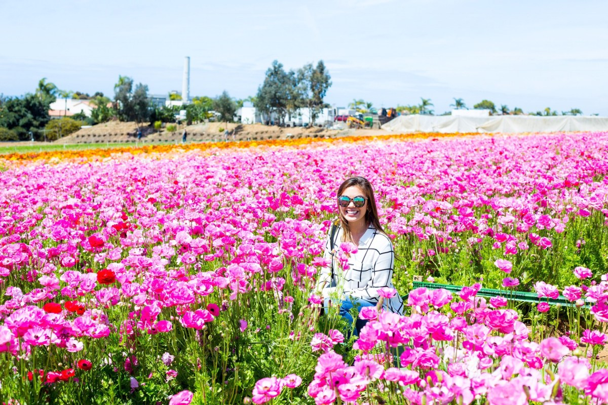 The Flower Fields of Carlsbad – yensisters