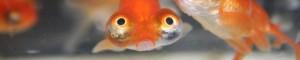 Me encanta el pez. Una vez conocí una así. Sad story.