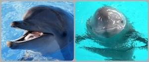 dolphin porpoise