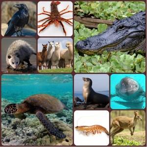 nombres de animales