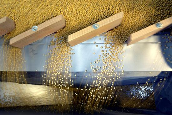 Canada set to export more soybeans to China amid trade war: sources