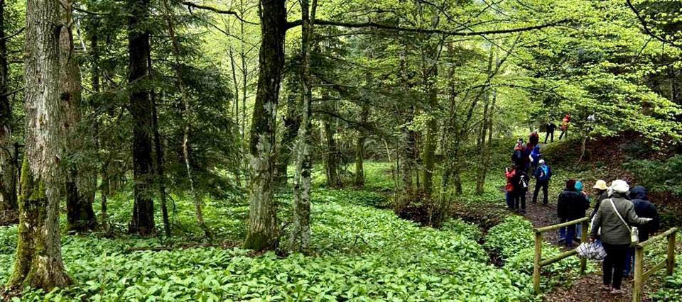 Riserva Naturale del Bosco di Don Venanzio  Yes Abruzzo