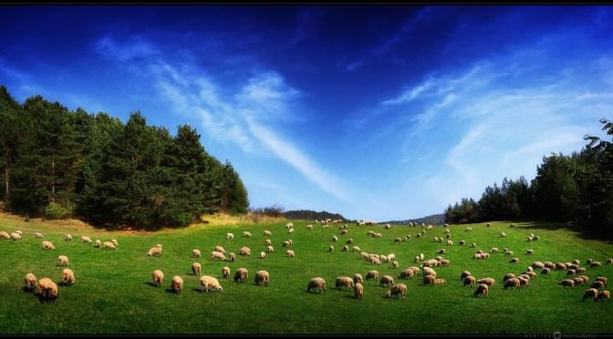 Opperherder Jesjoea en zijn schapen