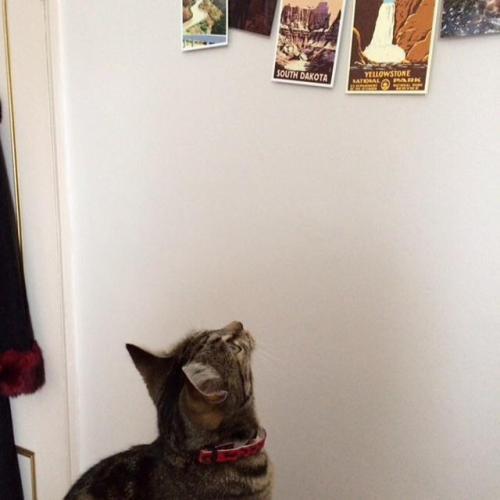 Sitting Tabby Cat