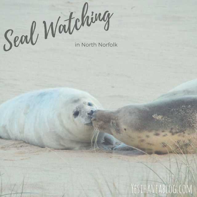 Seal Watching in Horsey North Norfolk | Yesihaveablog | Winterlust | Winter Travel