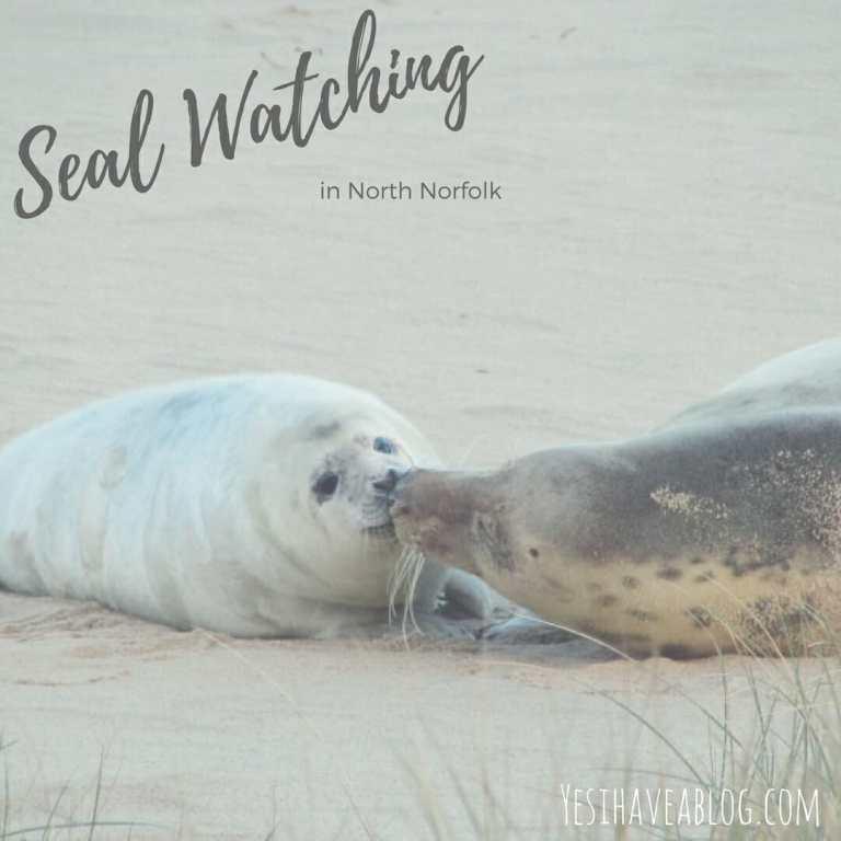 Seal Watching in Horsey North Norfolk   Yesihaveablog   Winterlust   Winter Travel