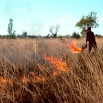To Help Australia, Look to Aboriginal Fire Management