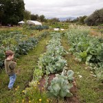 4 Lessons for Growing a Family Farm across Generations