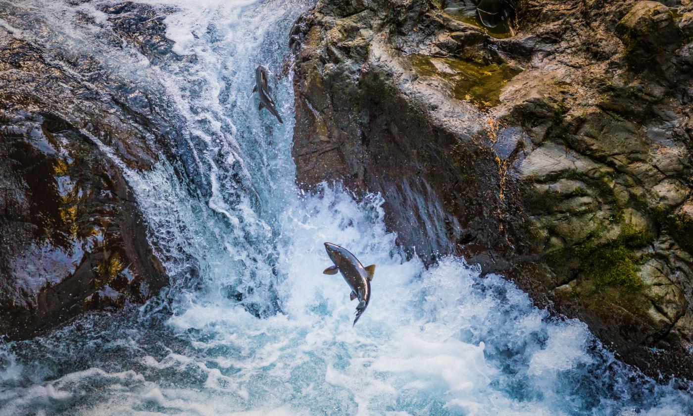 salmon-supreme-court.jpg