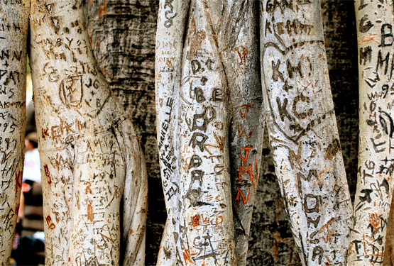 Names carved in tree by Randy Robertson.