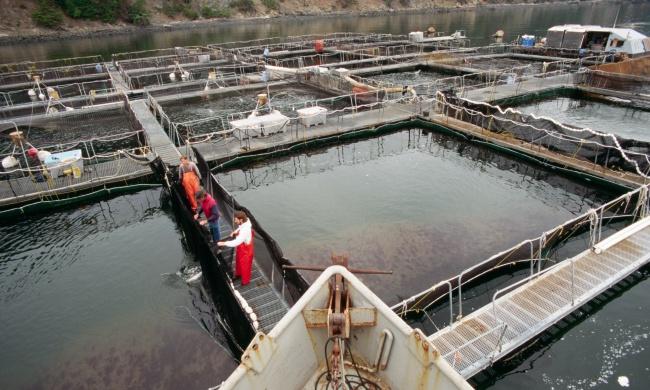 Salmon Escape.jpg