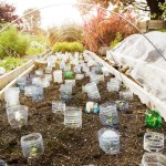 7 Ways to Garden Like You Know What You're Doing (Even If You're Just Getting Started)