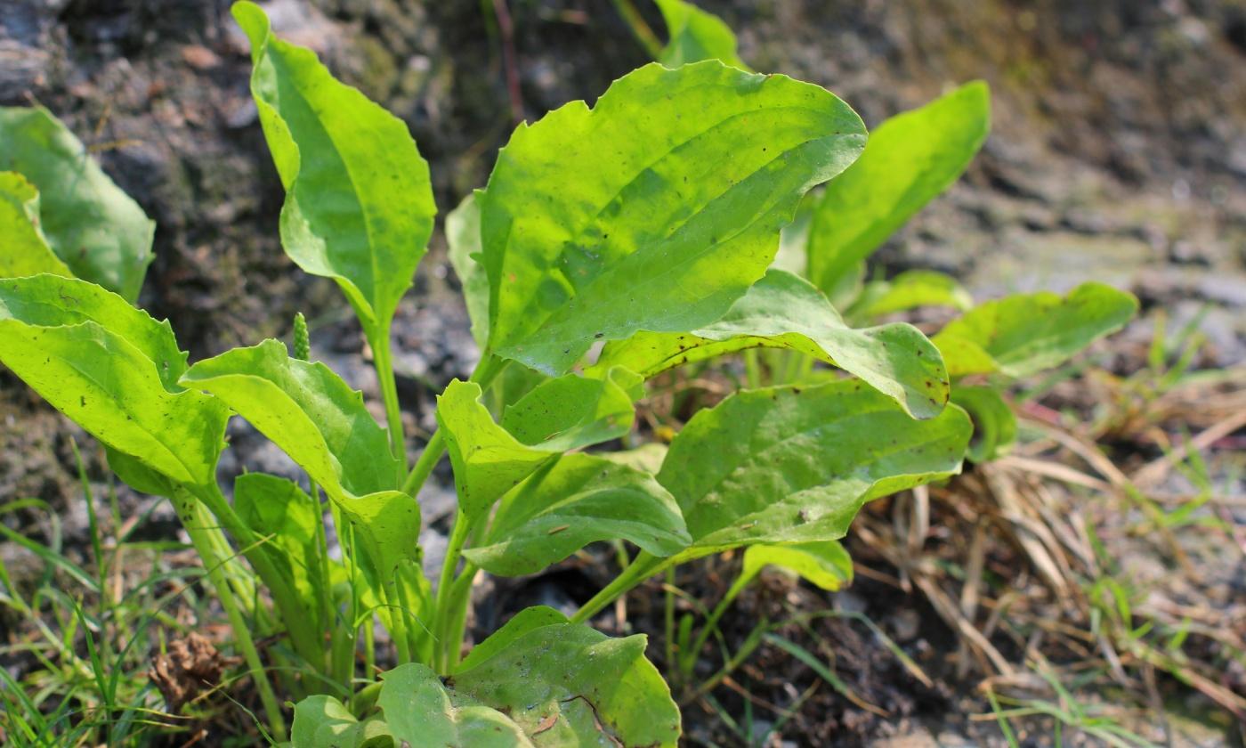 plants-invasive.jpg