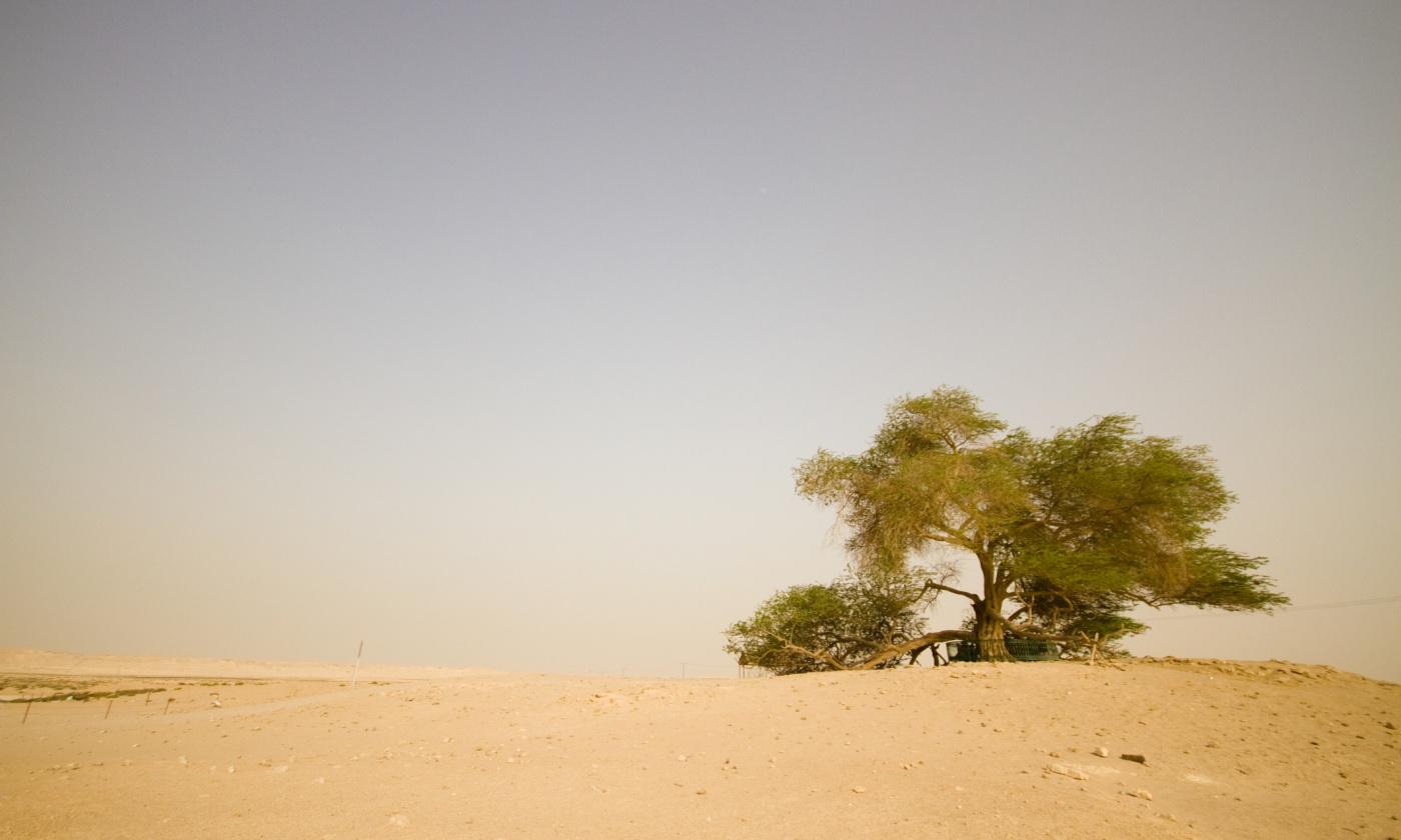 mesquite.jpg